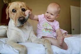 baby yanking on dog