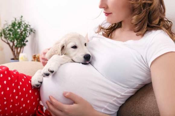 dog-babies-shutterstock_326225735